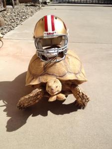 sammy the desert tortoise