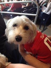 My friend Lisa's favorite fan-dog Winnie taking in the fun at Nationals Park.